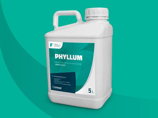 PHYLLUM